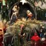 Vianoce v katedrále – Liturgický program na sviatky Narodenia Pána a Nový rok 2017